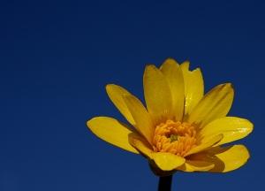 /Azul e amarelo