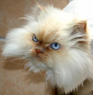 /Olhar azul...