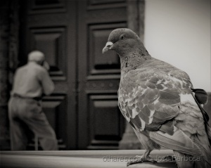 Fotografia de Rua/o Espírito do Amor e da Paz