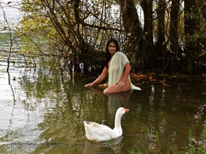 /O Lago do Cisne