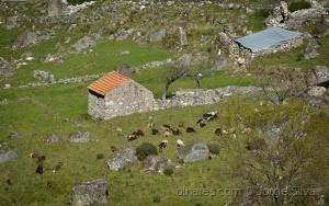 Gentes e Locais/Ainda há Pastores