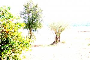 Outros/Árvores