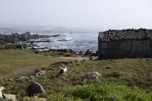 Paisagem Natural/Numa tarde ao pé do mar (em Vila Praia de Âncora)