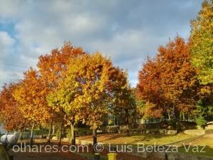Paisagem Natural/Outono na minha Escola