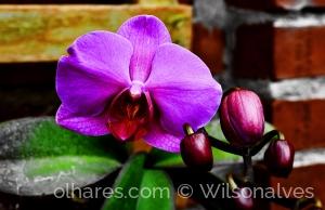 Macro/flor de orquídea...