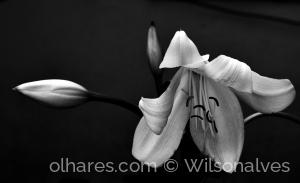 Outros/flor e botões...