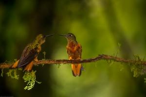 Animais/Bird talk.