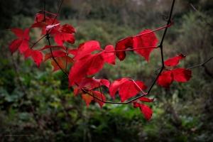 Paisagem Natural/Folhas de Inverno