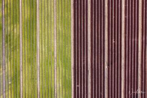 Paisagem Natural/Simetria agrícola