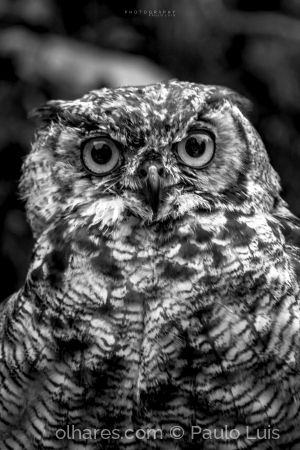 Animais/Um olhar atento