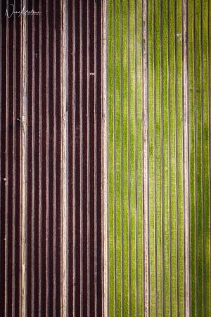 Paisagem Natural/Simetria agrícola II