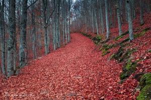 Paisagem Natural/As últimas folhas