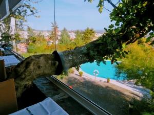 Fotojornalismo/A favor da natureza
