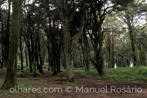 Paisagem Natural/Encantos da Serra...
