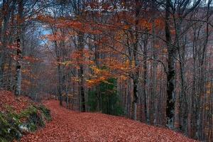 Paisagem Natural/Outono no bosque de São Lourenço