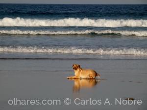 Animais/Descanso à beira mar