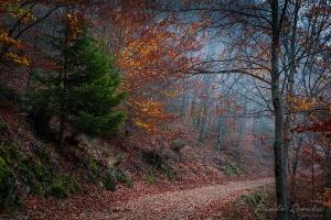 Paisagem Natural/Caminhos de outono