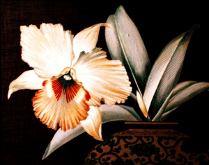 Macro/Uma bela Flor.........