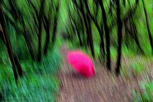 Paisagem Natural/O Chapéu Cor de Rosa