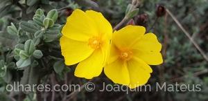 Outros/Flores do campo...