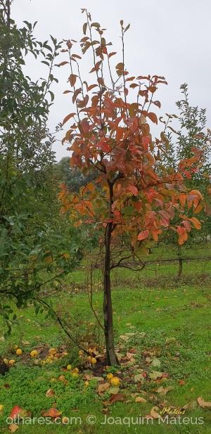 Outros/Outono
