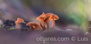 Macro/Fungos