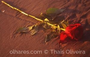 Outros/Rosas da Rainha do Mar