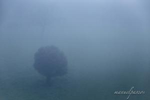 Paisagem Natural/Nevoeiro cerrado