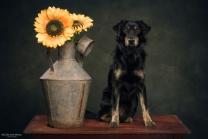 Animais/JAMES and the Sunflowers