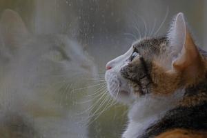 Animais/parece que chove