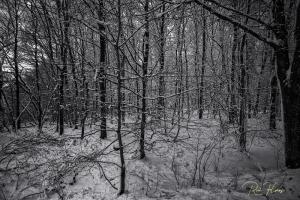 Paisagem Natural/Ensaios a P&B #8 - Inverno caotico
