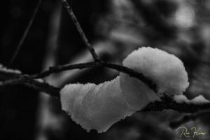 Paisagem Natural/Ensaios a P&B #9 - Neve