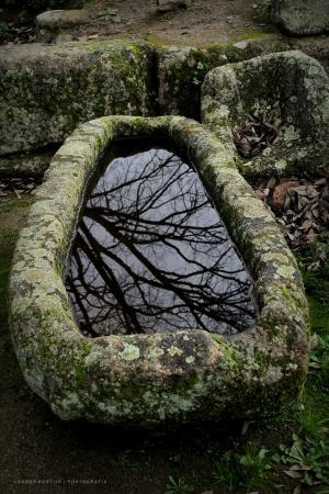 /Árvore Reflectida no Túmulo