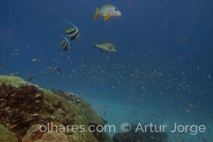 Paisagem Natural/Algures no fundo do mar