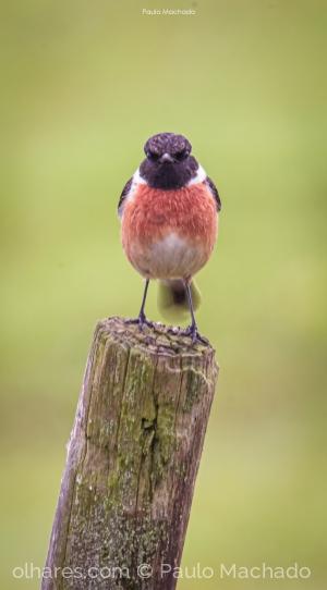 Animais/angry bird