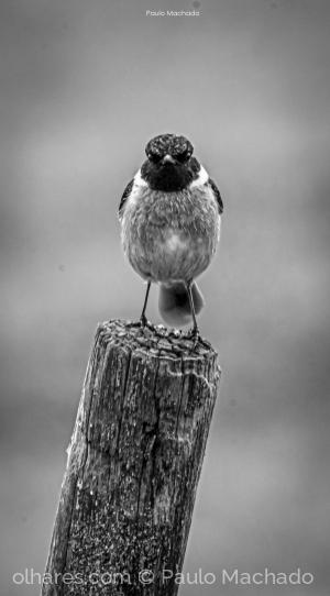 Animais/angry bird (b/w)