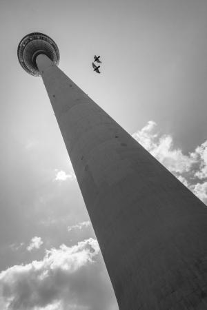 Fotografia de Rua/Passam dois pombos na minha torre