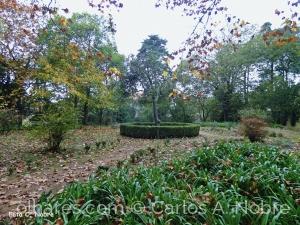 Paisagem Natural/Outono na mata Rainha D.Leonor