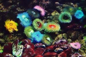 /jardins oceânicos