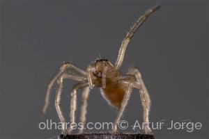 Animais/A aranha