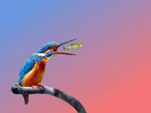 Arte Digital/Martin Pescador
