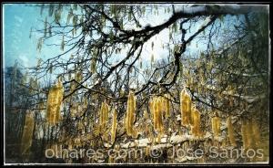 Outros/renascido no amarelo