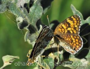 /Um amor de borboletas para dia de namorados!
