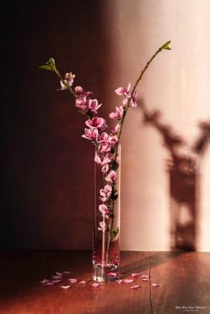 /Flor do Pessegueiro