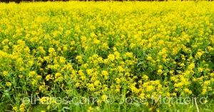 Paisagem Natural/A perder... de... amarelo...