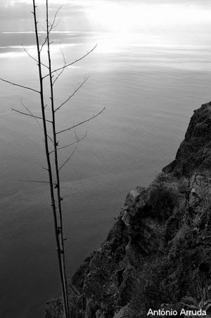 Paisagem Natural/Acaba a Terra Começa o Mar