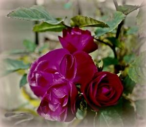 /Rosas Vermelhas ....