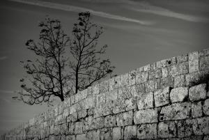 Paisagem Natural/Muro com Árvore