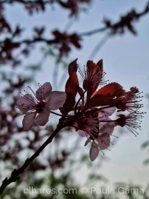 /Flores a alegrar o cinza do dia...