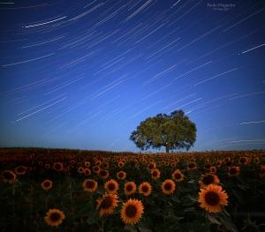 Paisagem Natural/Por debaixo das estrelas